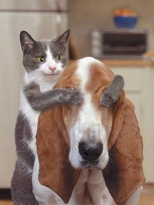 Oh! Il gatto Maraschino, goloso di occhi, ha appena fatto un colpo gobbo ai danni del povero Culo. Guardate che sguardo contento ha il furbo felino. E guardate lo stupore di Culo mentre artigli affondano nei suoi bulbi oculari. Sorpresa!