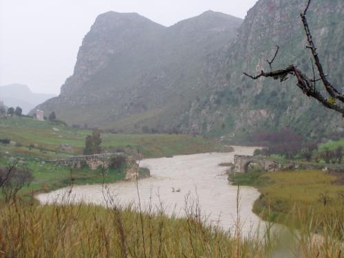 Il gallodoro in piena milocca milena libera - Il giardino sul fiume ...