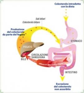 colesterolo_dieta