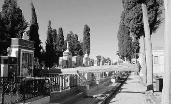 L´alberro caduto al cimitero: tragedia sfiorata e danni ingenti