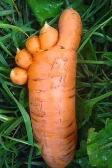 pie di carota