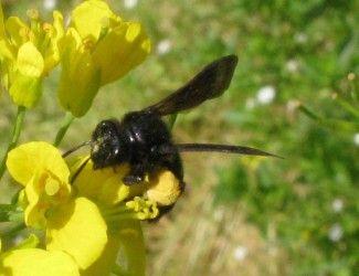 db70c5c879474cfc3648a2a86e6be08b--ali-bees